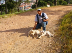 A shepherd with young lambs in Cennet Tepesi (Heaven Tower Park) above Ayvalik.